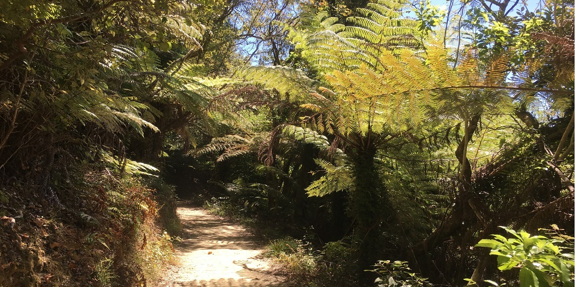 Queen Charlotte Track 1