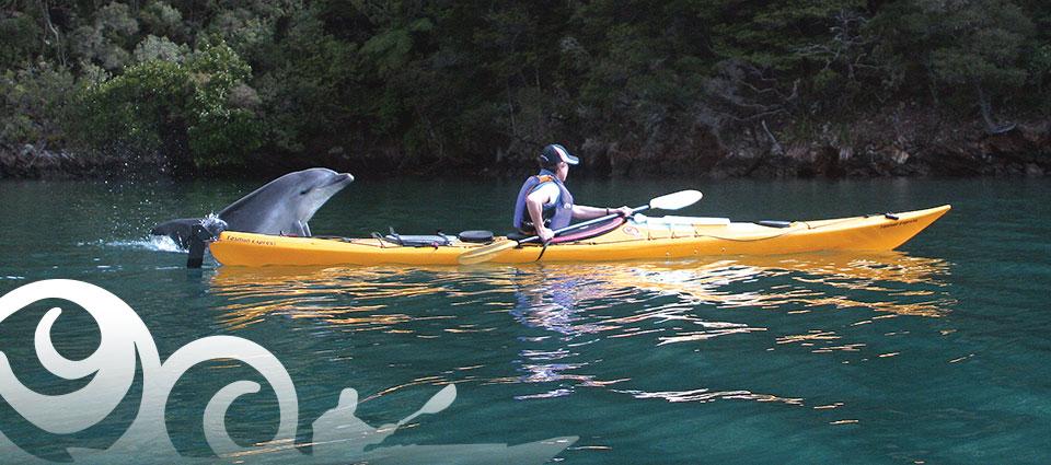 Sea-Kayak-Adventures-dolphin